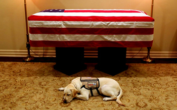 Bush 41 flag-draped coffin and his dog besides it
